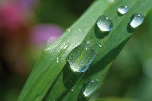 Regenwassernutzung | OPTA Massivhaus